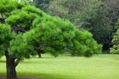 樹木医として